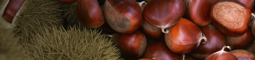 buy fresh chestnuts here