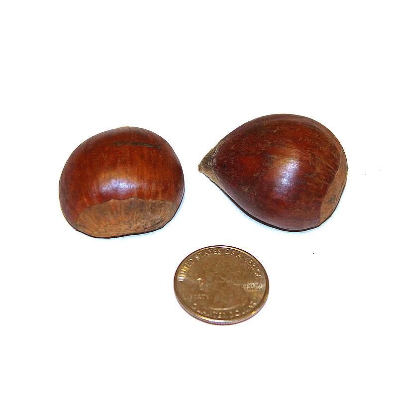 Buy - Large Chestnuts